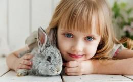 rabbit-3660673_640
