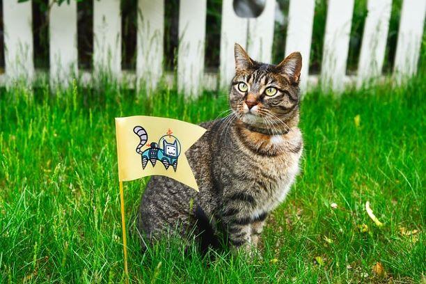 cat-1979438_640